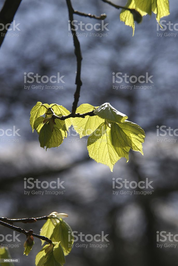 Leaf royalty-free stock photo