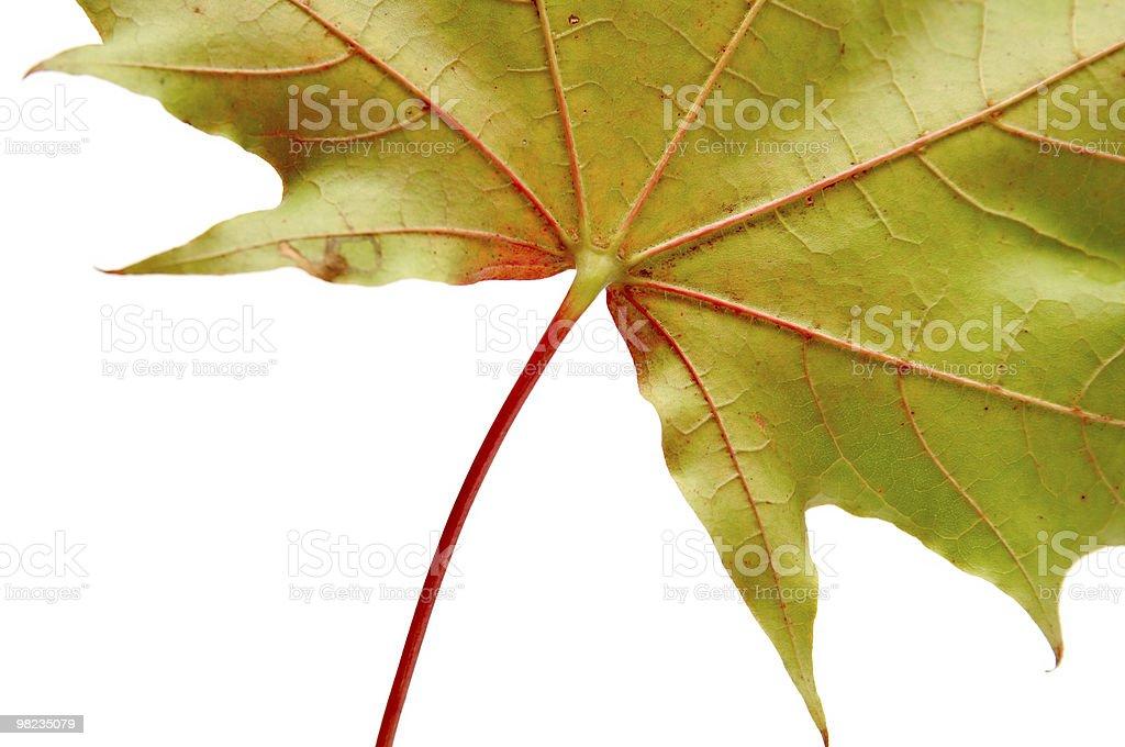 Leaf royalty-free 스톡 사진