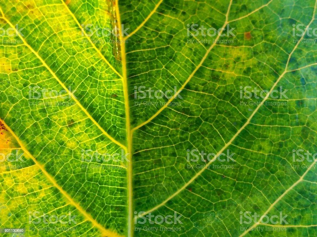 yaprak bitki doğa doku arka plan - Royalty-free Arka planlar Stok görsel