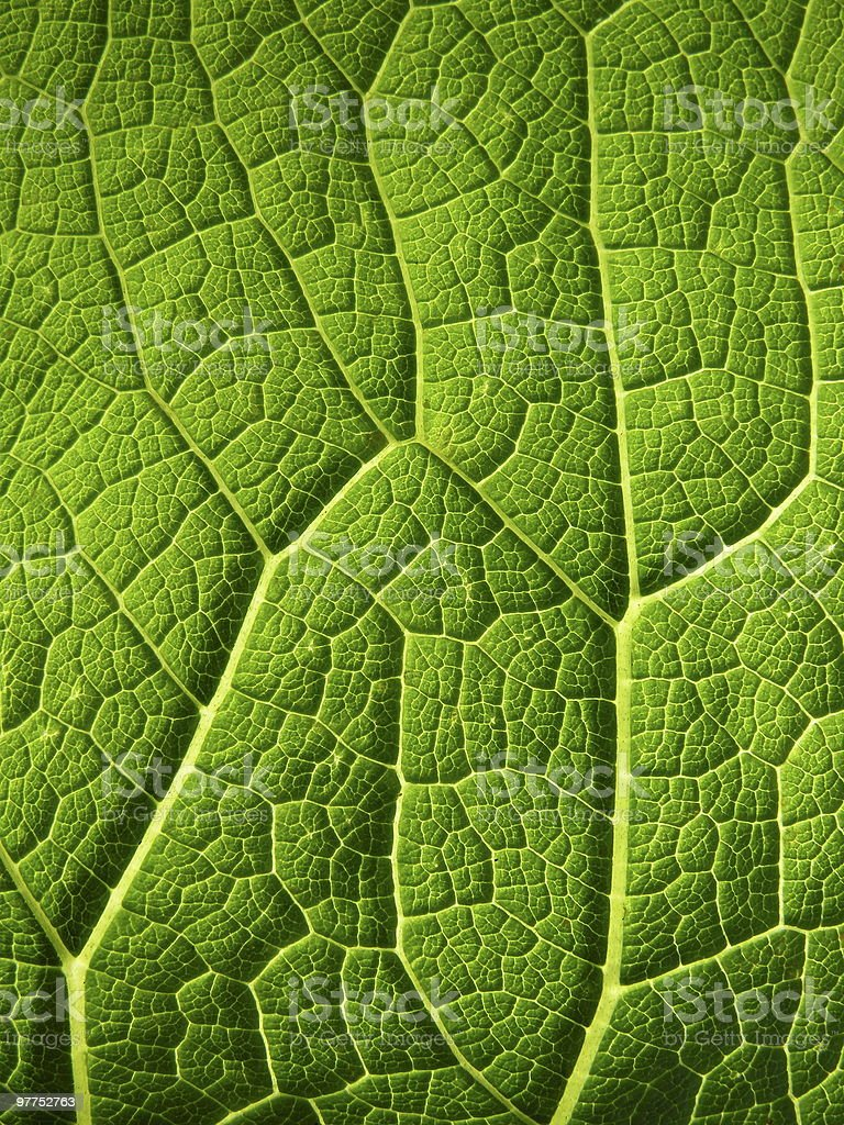 leaf relief royalty-free stock photo