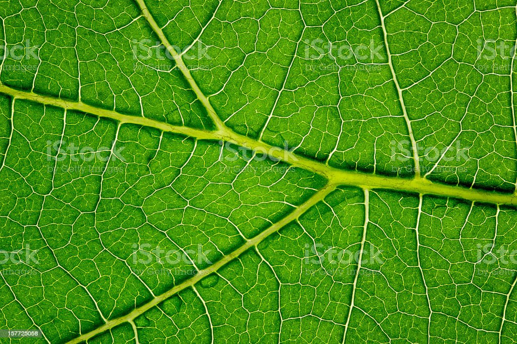 Leaf Series royalty-free stock photo