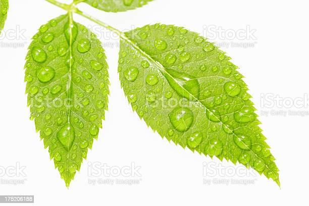 Photo of Leaf Series