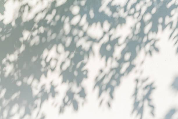 葉影立ち下がり壁 ストックフォト