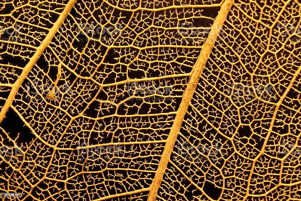 Leaf Skeleton Macro stock photo