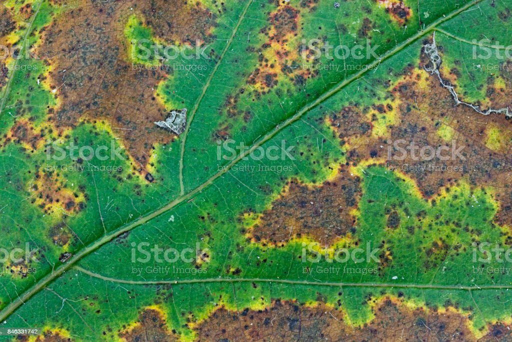 Leaf Slowly Withers in Autumn stock photo