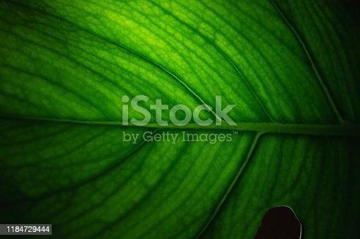 istock Leaf surface macro 1184729444