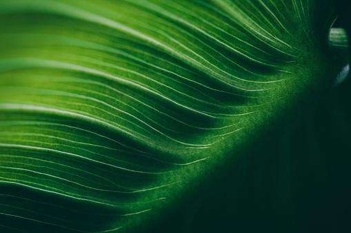 Leaf surface macro , shallow DOF