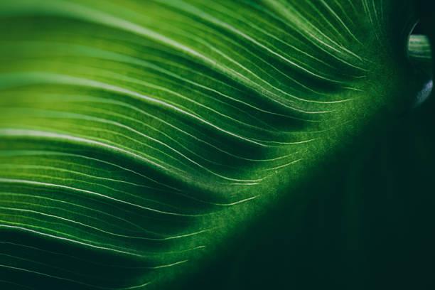 leaf, macro dof superficial superficie - textura naturaleza fotografías e imágenes de stock