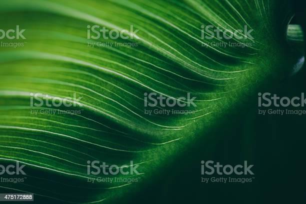 Photo of Leaf surface macro , shallow DOF