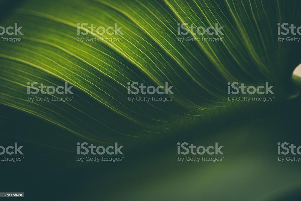 Blatt Oberfläche Makro, flachen DOF – Foto
