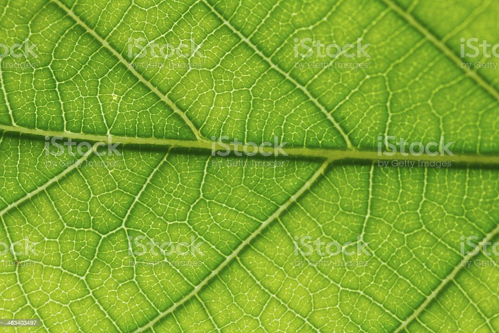 Leaf surface royalty-free stock photo