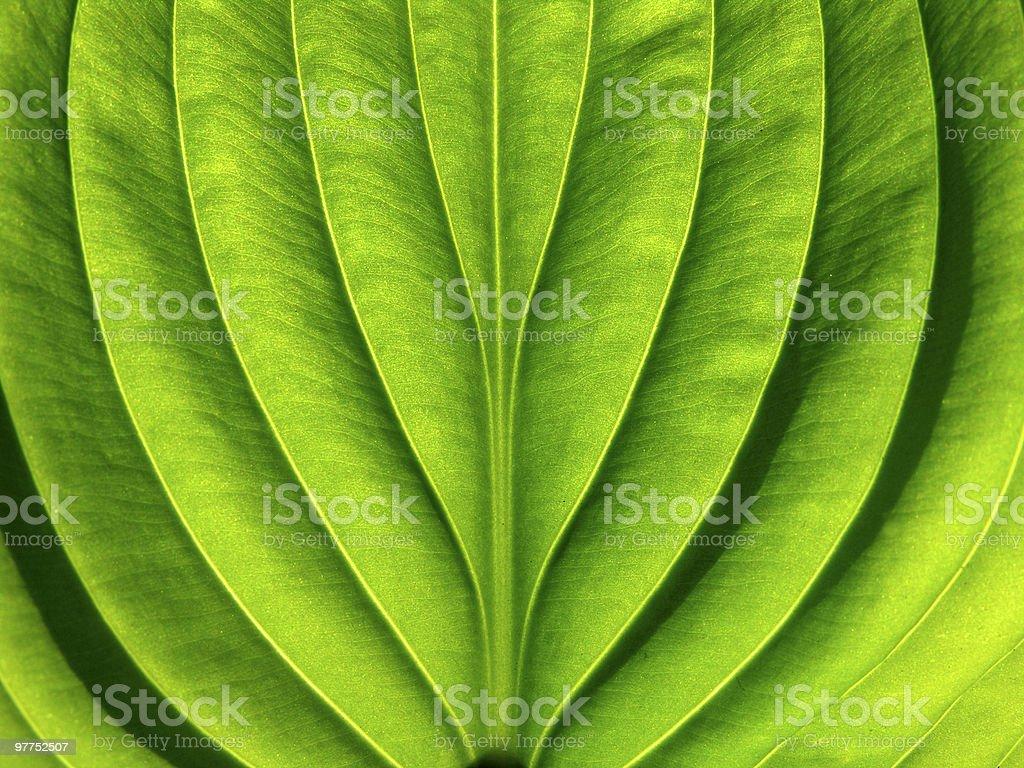 leaf surface stock photo