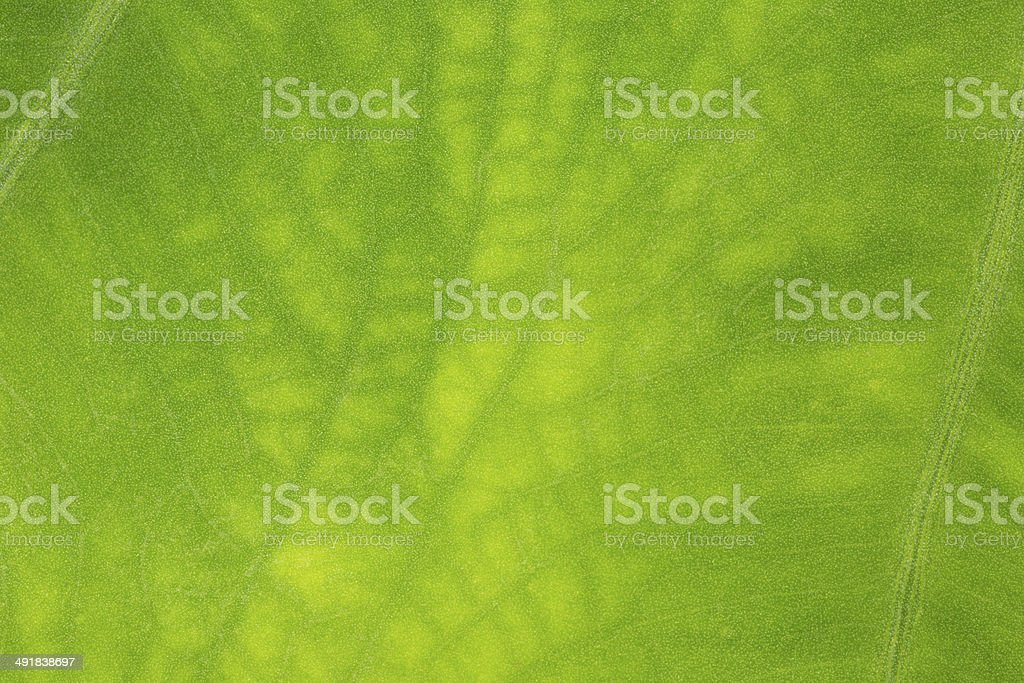 Leaf surface  - Stock Image stock photo