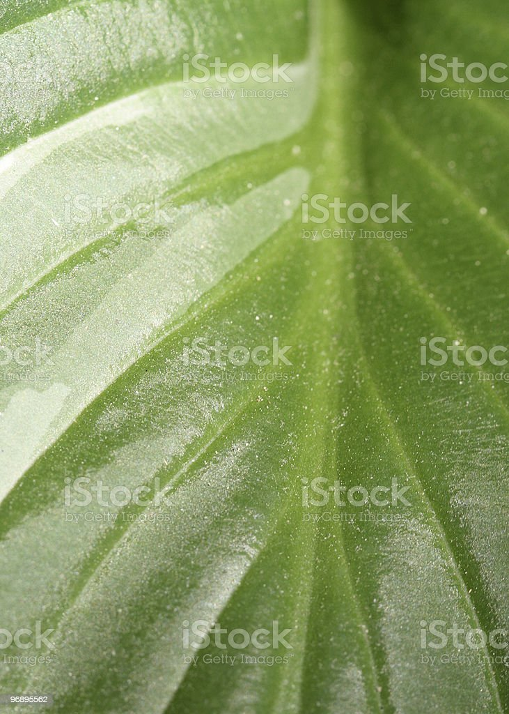 Leaf texture 2 royalty-free stock photo