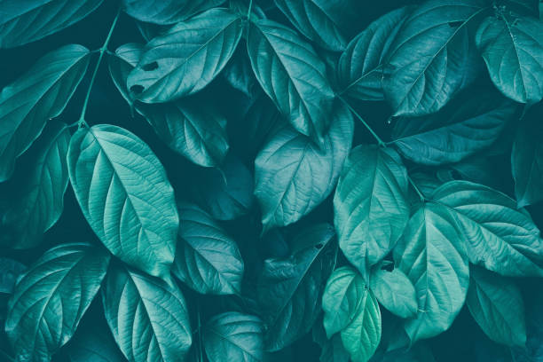 leaf texture background - foliate pattern stock photos and pictures