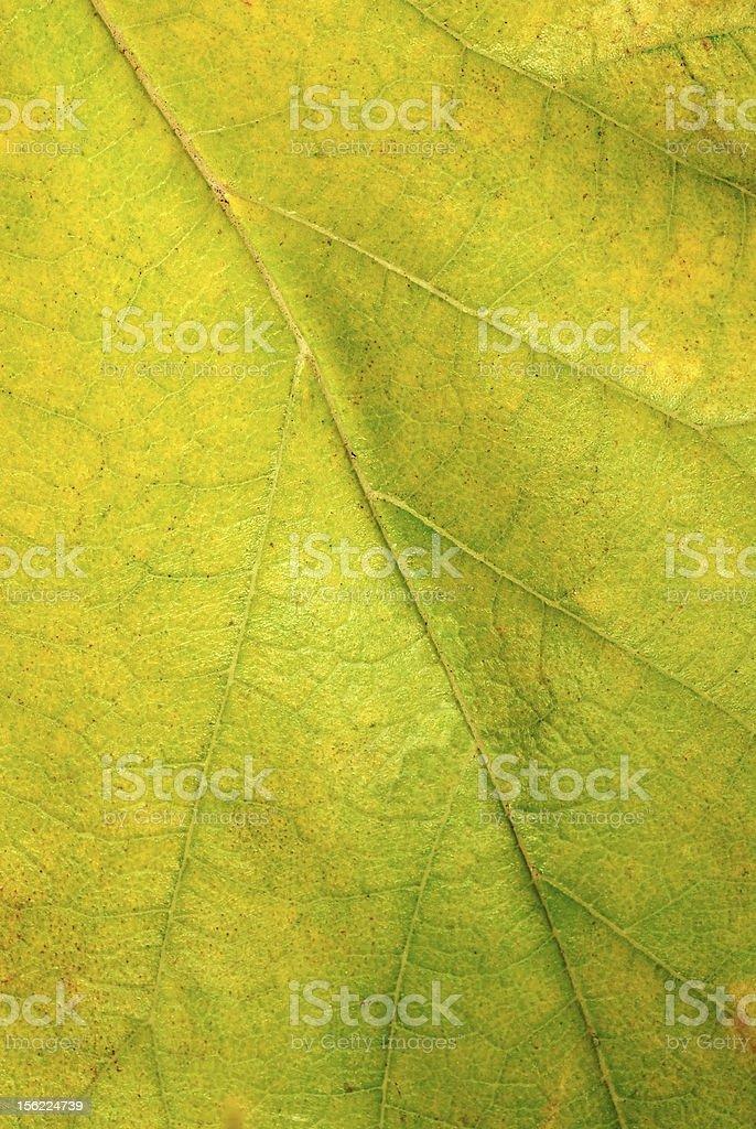 Leaf texture closeup royalty-free stock photo