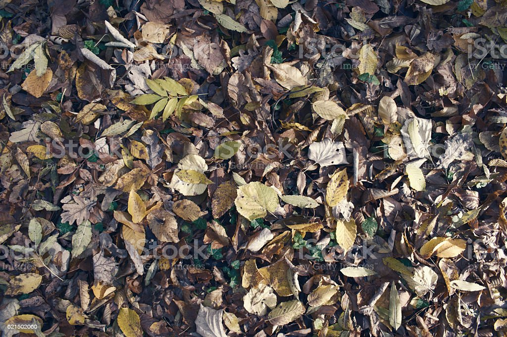 Leaf Texture, Fall Background foto stock royalty-free