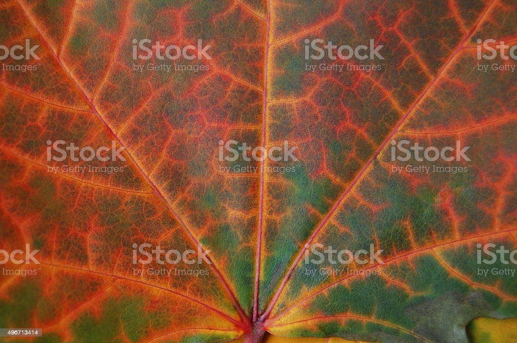 Leaf texture in autumn. stock photo