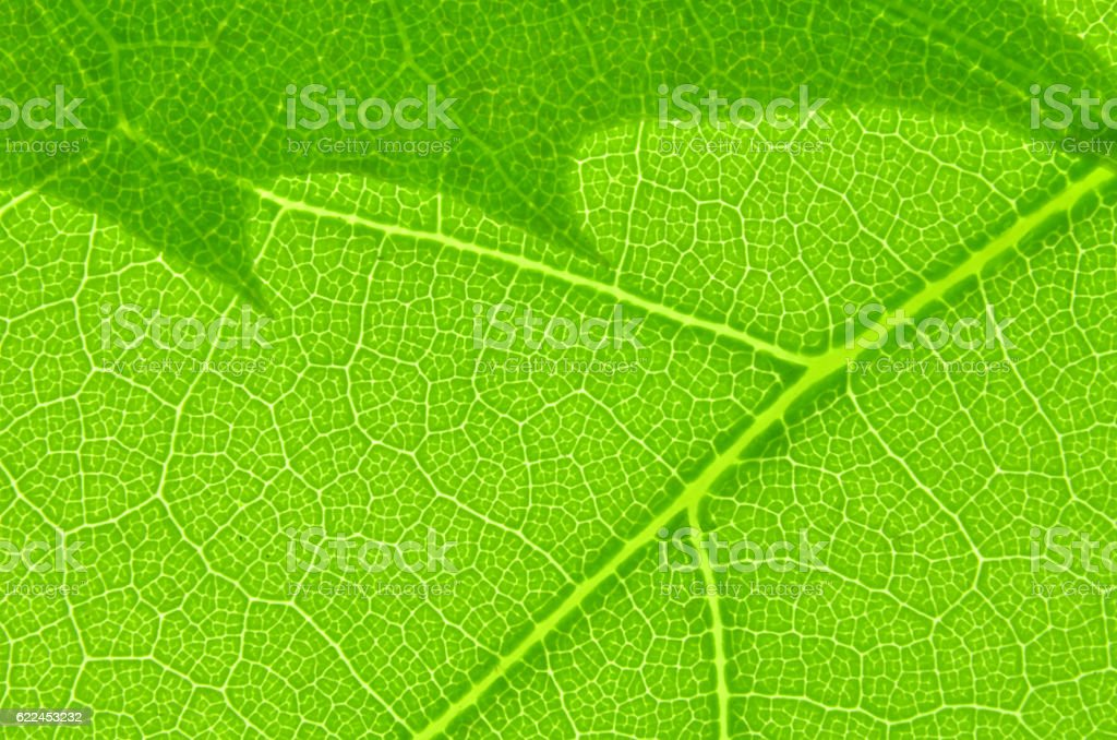 Leaf texture macro stock photo