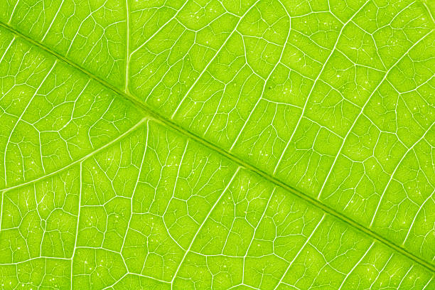 leaf texture or leaf background for design. - foliate pattern stock photos and pictures