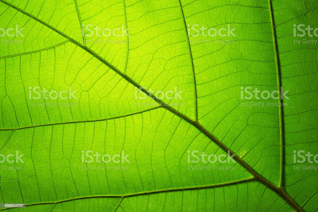 Leaf texture pattern for spring background stock photo