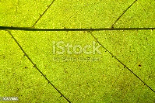 istock Leaf texture 90822683