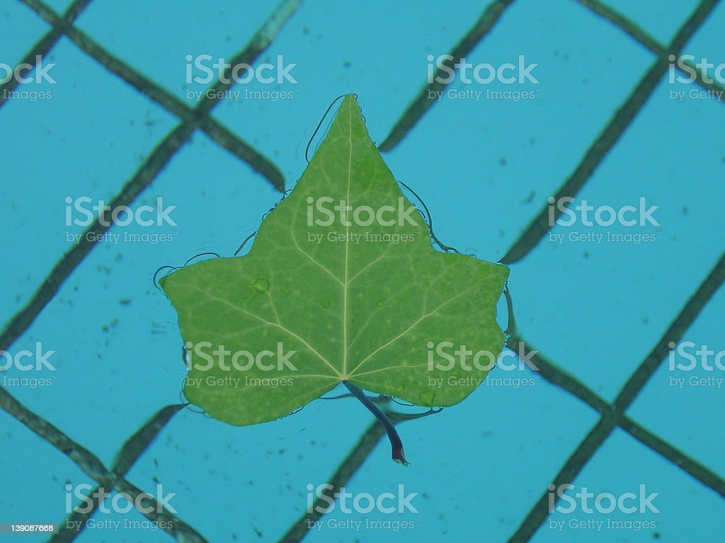Leaf to float close up royalty-free stock photo