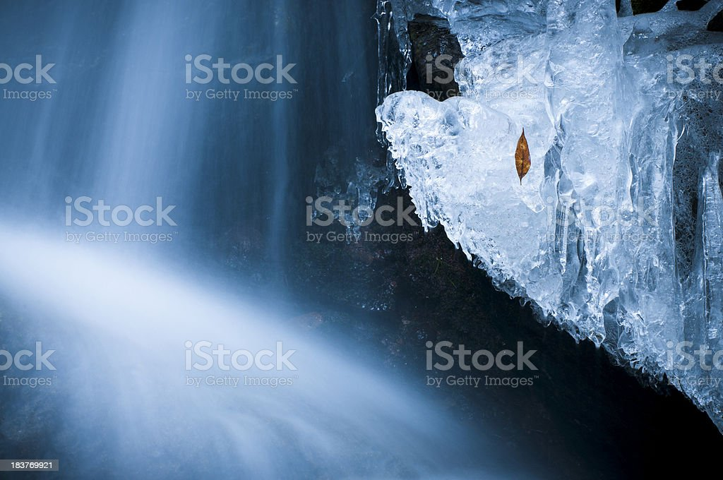 Leaf trapped in the ice stock photo
