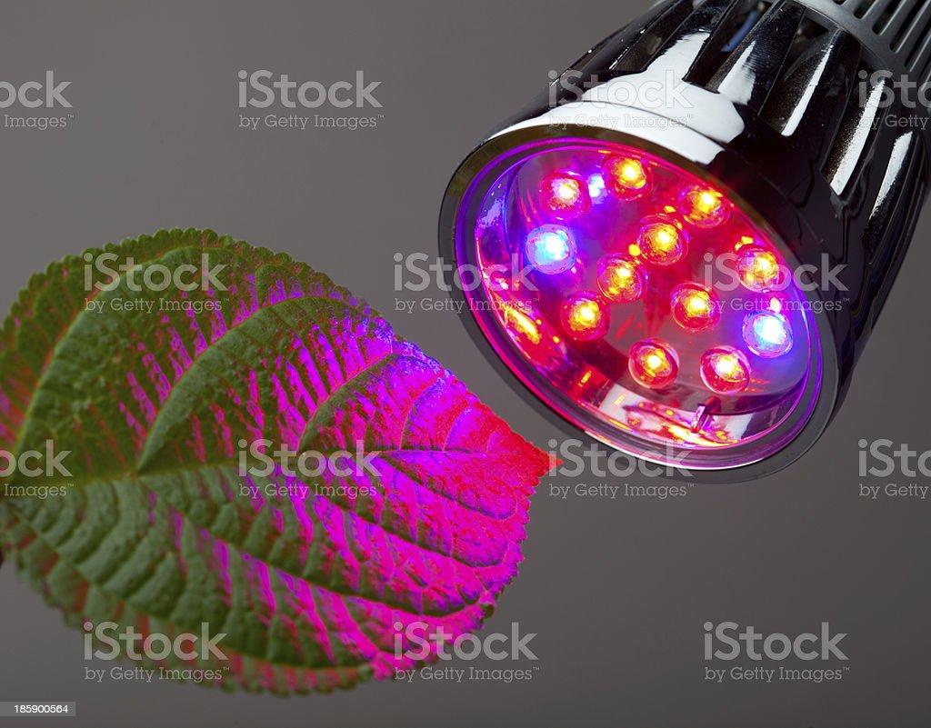 Leaf under a pink LED grow light stock photo