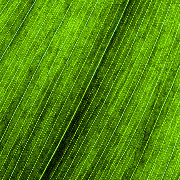 leaf veins close-up background - foliate pattern stock photos and pictures
