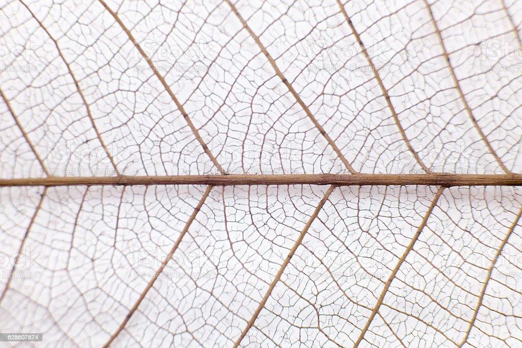 leaf veins stock photo