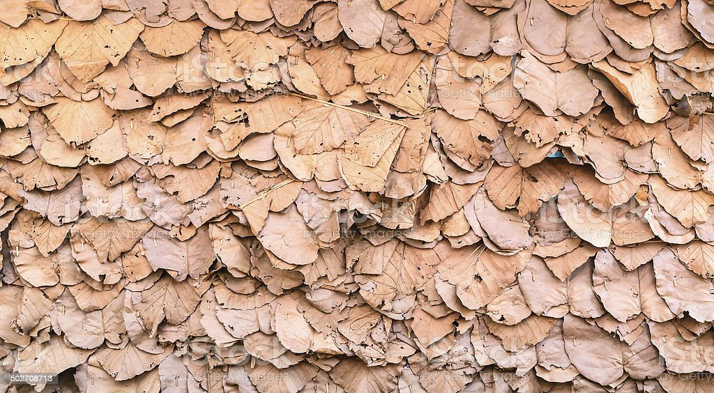 leaf wall texture is natural wall stock photo