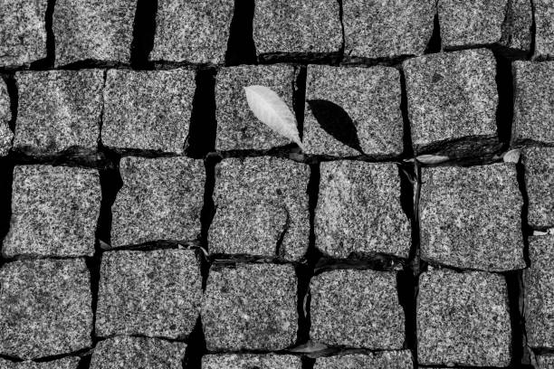 Leaf Water Brick Shadow stock photo