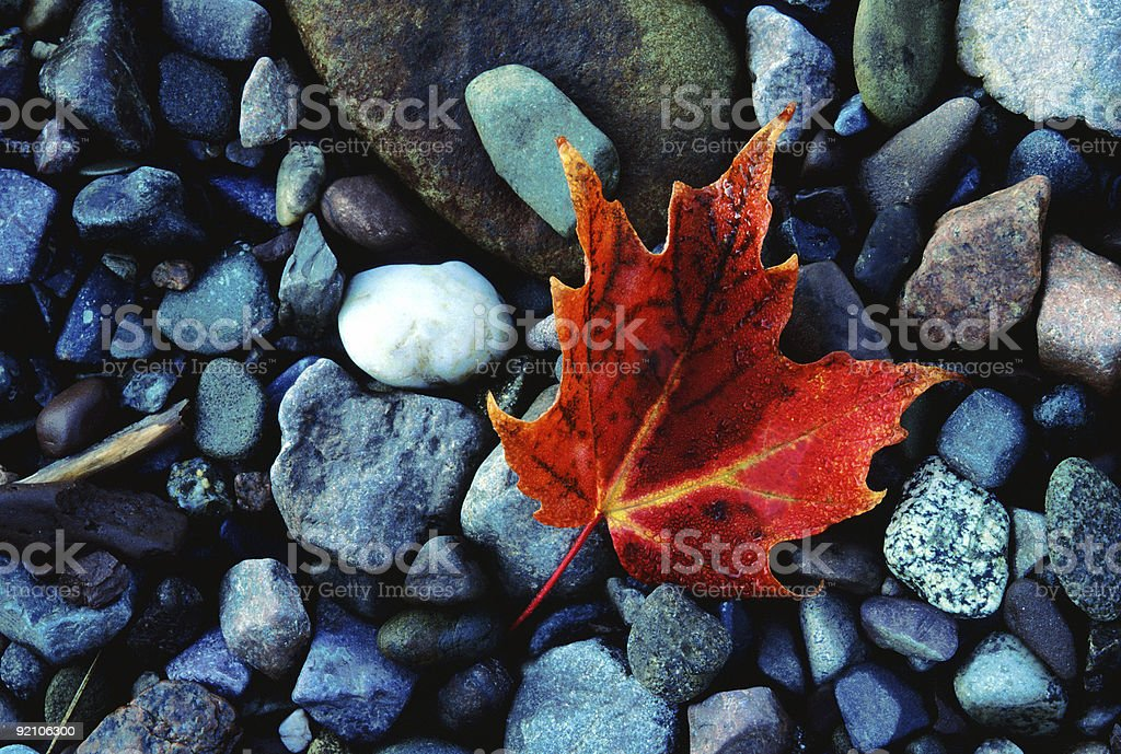Leaf with Dew on the Rocks royalty-free stock photo