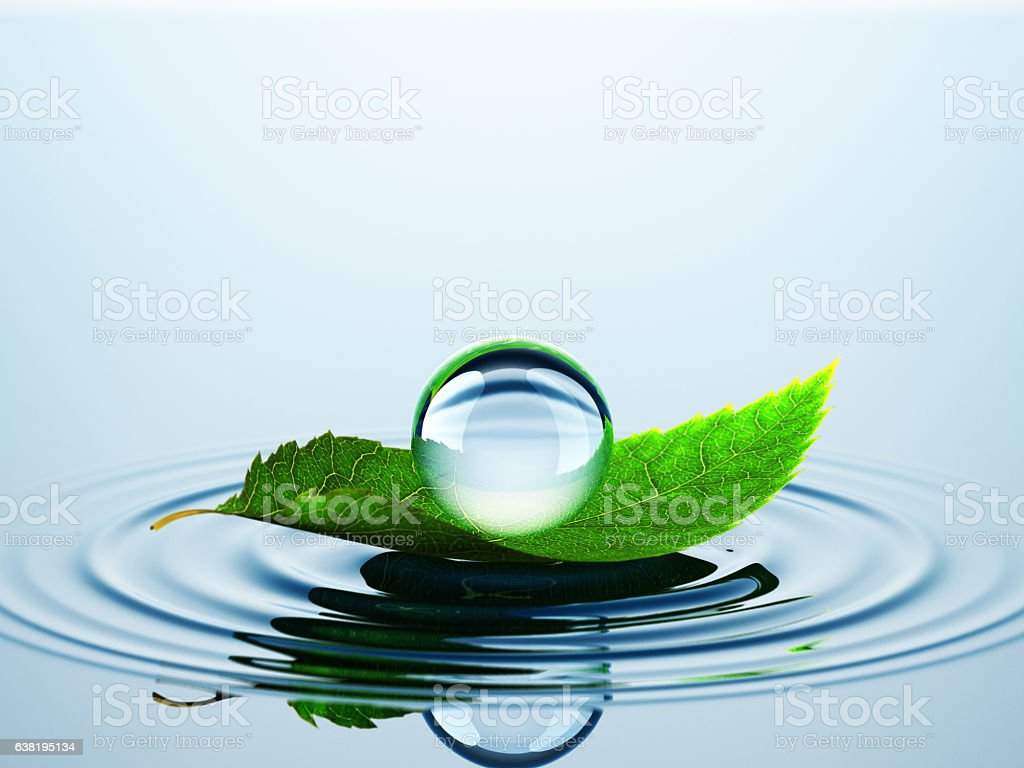 Leaf With Drop On The Water stock photo