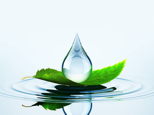 leaf with drop on the water - water born nature imagens e fotografias de stock