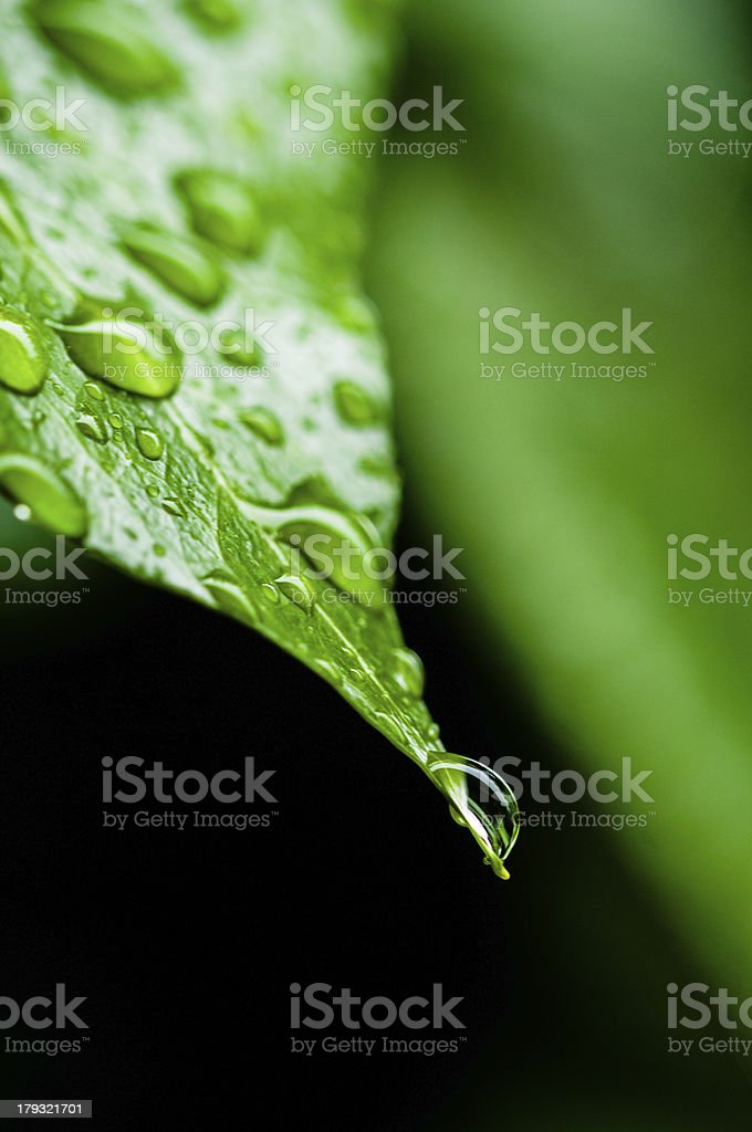 leaf with drop royalty-free stock photo