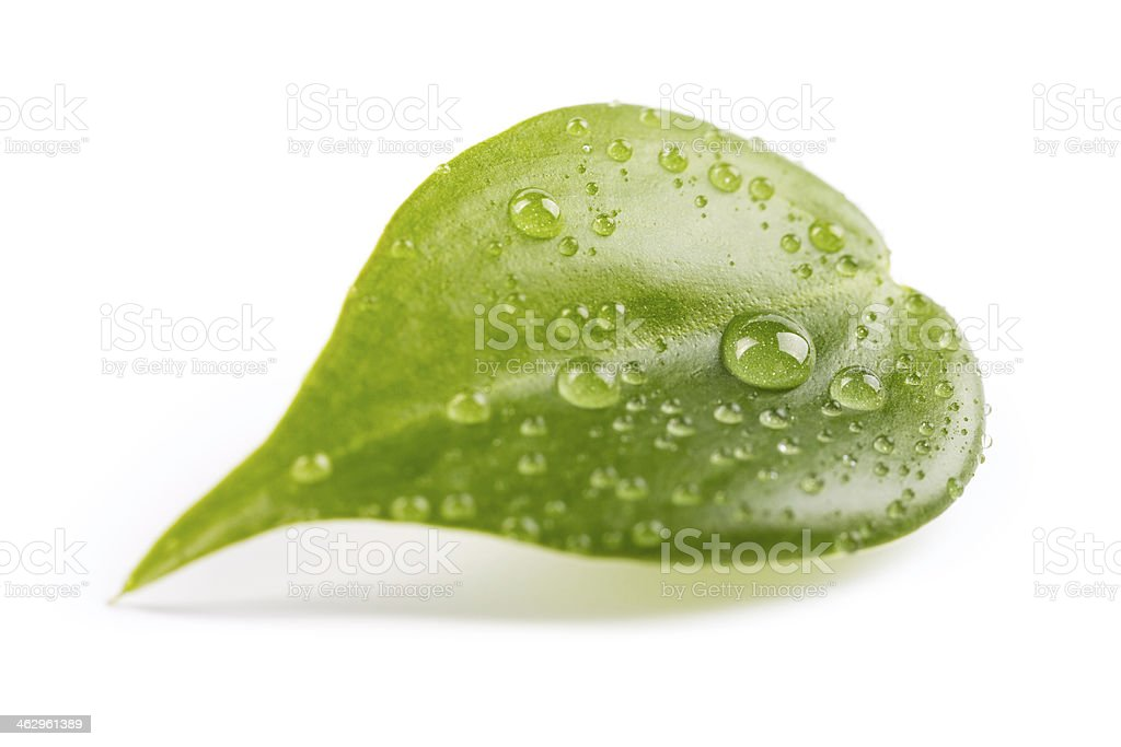 leaf with droplets royalty-free stock photo