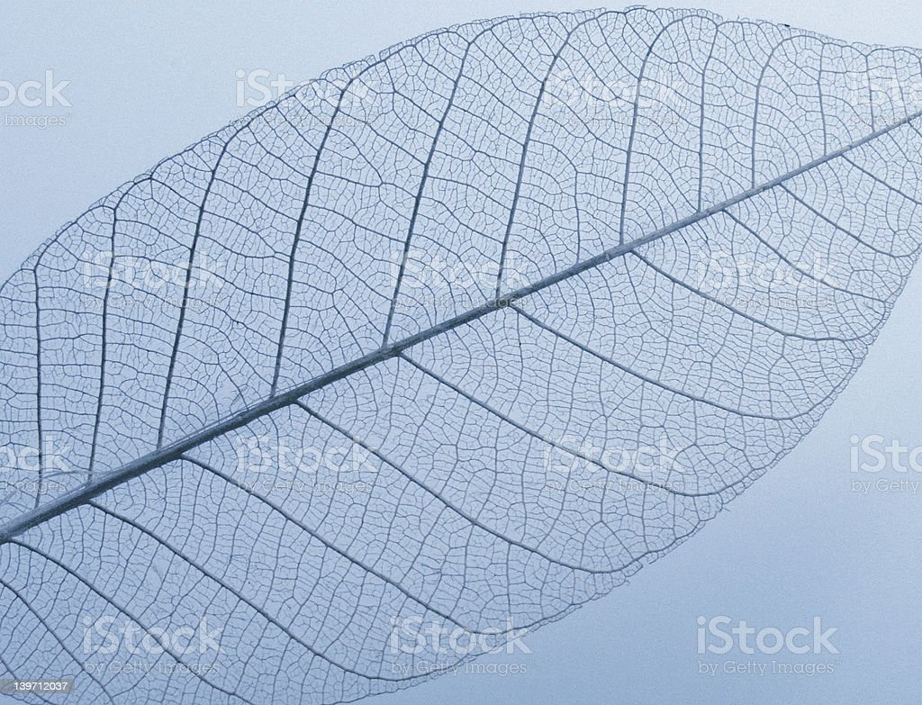 Leaf - with grain royalty-free stock photo