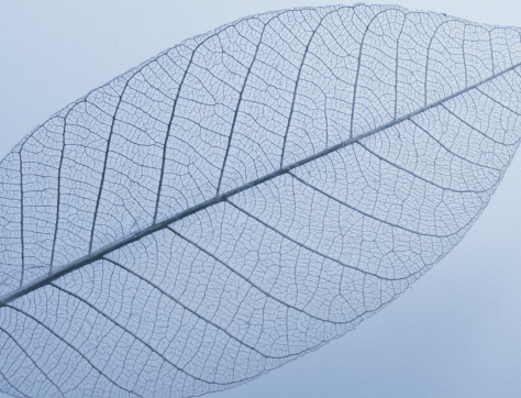 Leaf - with grain