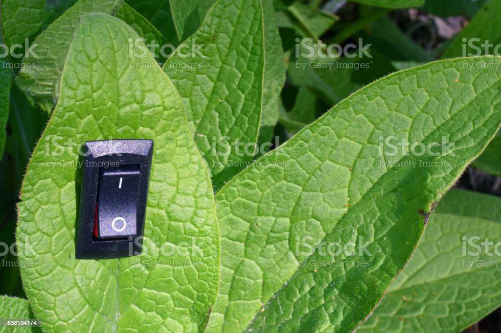 Leaf with inserted power switch stock photo