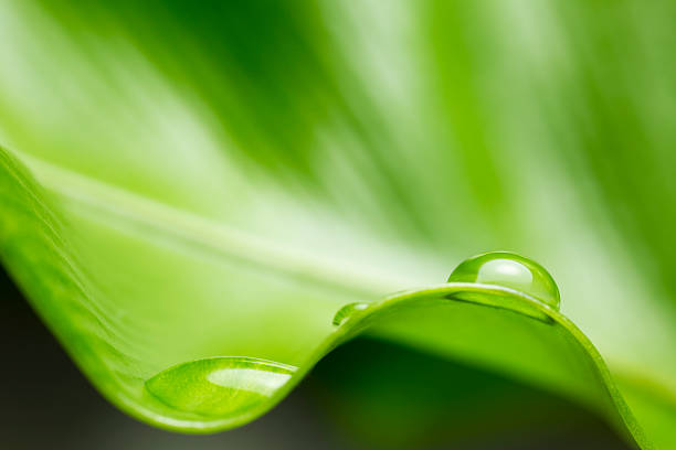 Hoja con gota de agua de lluvia - foto de stock