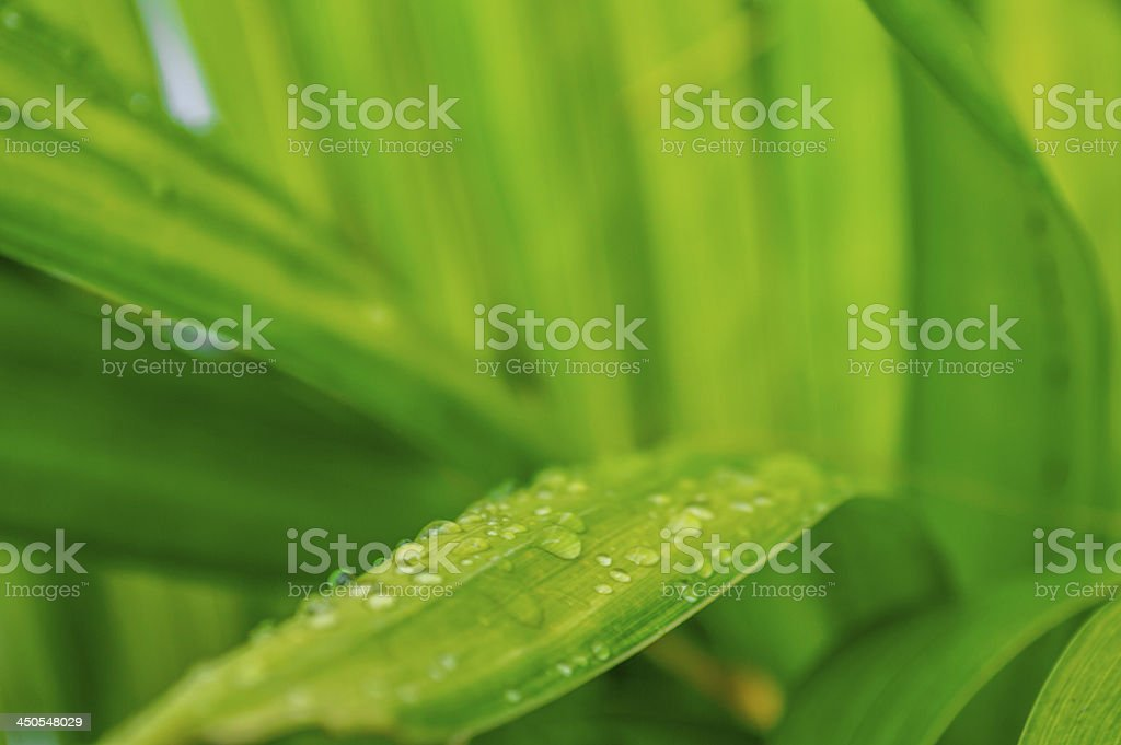 leaf with rain droplets 08 royalty-free stock photo