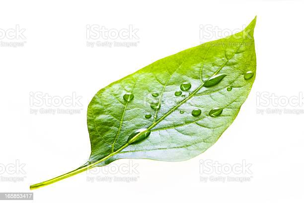 Photo of leaf with rain droplets