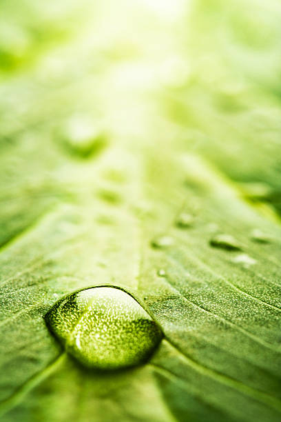 leaf with rain droplets - series stock photo
