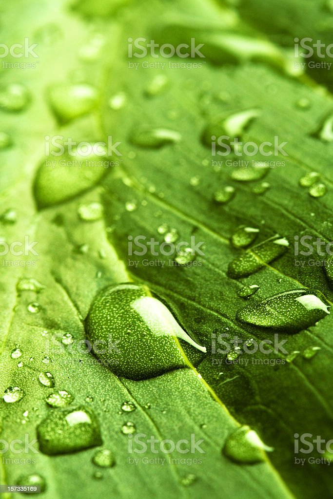 leaf with rain droplets - series royalty-free stock photo