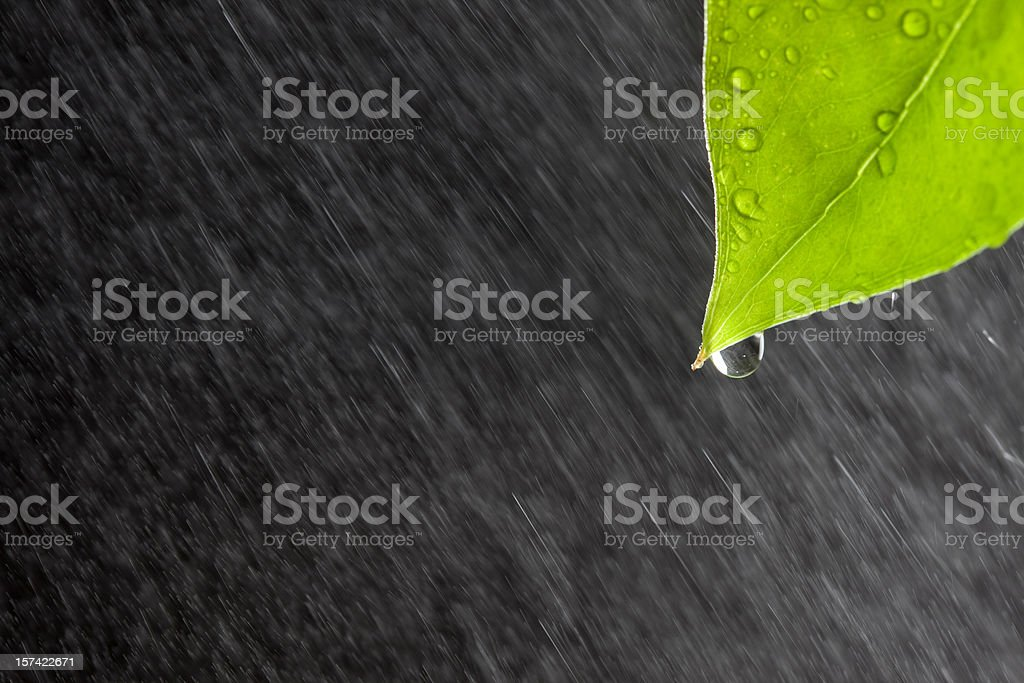 Leaf with rain royalty-free stock photo