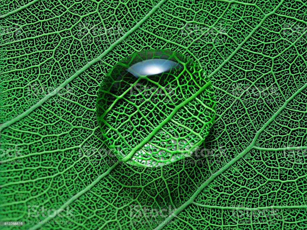 Leaf with water drop macro closeup photo stock photo