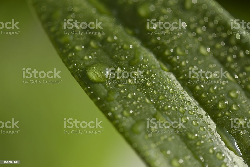 Leaf with waterdrops and bokeh stock photo