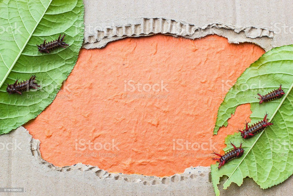Leaf worm blank photo.  paper background stock photo